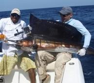 Panama Sailfish